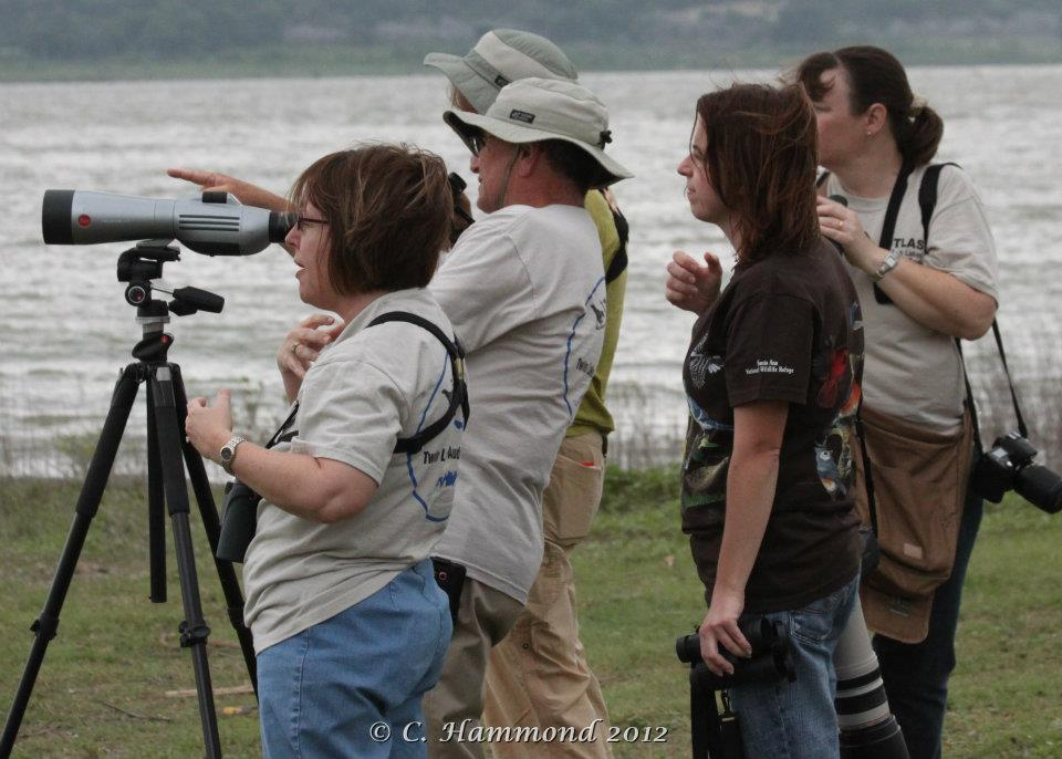 Looking for Tree Swallow Nest.jpg